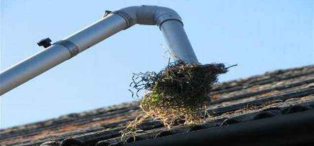 Gutter cleaning Edenbridge