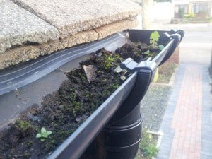 Gutter Cleaning Sutton - Before